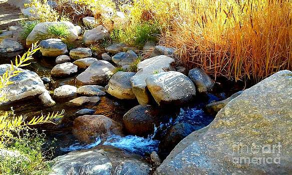 Rocky Creek by Deborah  Yeager