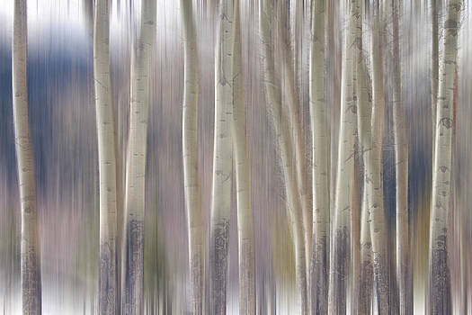 James BO  Insogna - Rocky Mountain Winter Aspen Tree Forest Dream