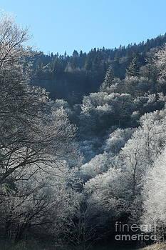 Rocky Top Winter by Jeanne Forsythe