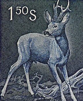 Roe Deer Buck by Andy Prendy