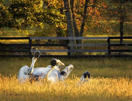 Roll in the Hay by Joan Davis