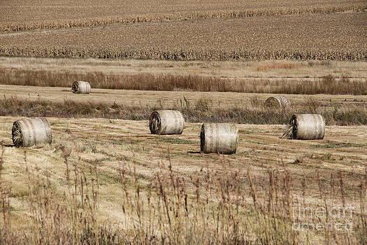 Roll on the hay by Taschja Hattingh