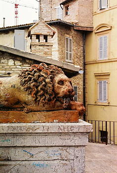 Roma Lion by Carita Guyett