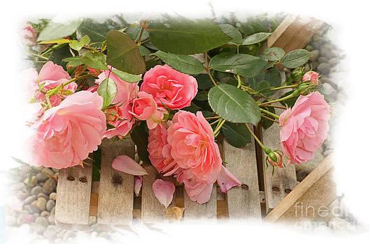 Liz  Alderdice - Romance and Roses