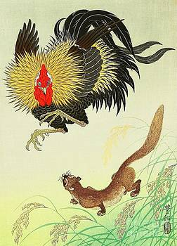Roberto Prusso - Rooster and Weasel