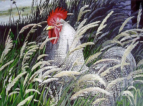 Martha DArt - Rooster In Long Grass