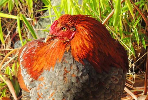 Rooster by Karen Horn