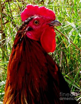 Gail Matthews - Rooster the Male Chicken