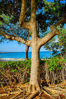 Omaste Witkowski - Rooted Tropical Tree