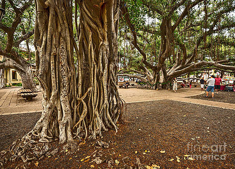 Jamie Pham - Roots - Banyan Tree Park in Maui
