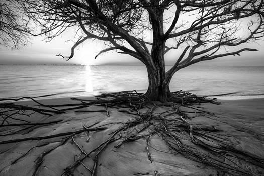 Debra and Dave Vanderlaan - Roots Beach in Black and White