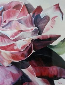 Rose 2 by Robert Foss