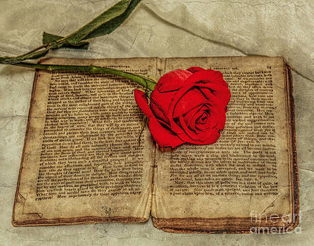 Randy Steele - Rose and Old Book Still Life
