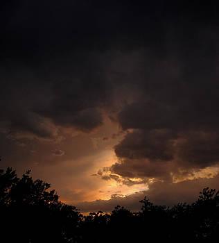 Rose Evening by Ken Rutledge