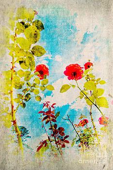 Dan Carmichael - Rose Garden II