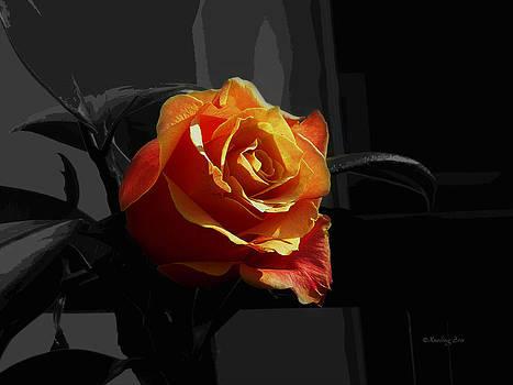 Xueling Zou - Rose I