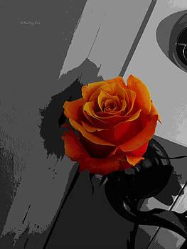 Xueling Zou - Rose II - Secret Admirer