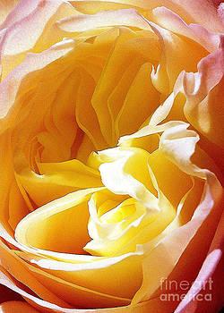 Rose II by Waverley Dixon
