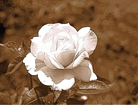Rose In Sepia by Victoria Sheldon
