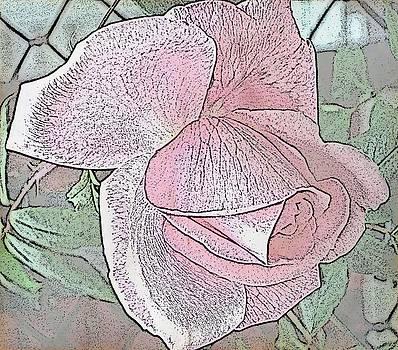Rose by Judy Palkimas