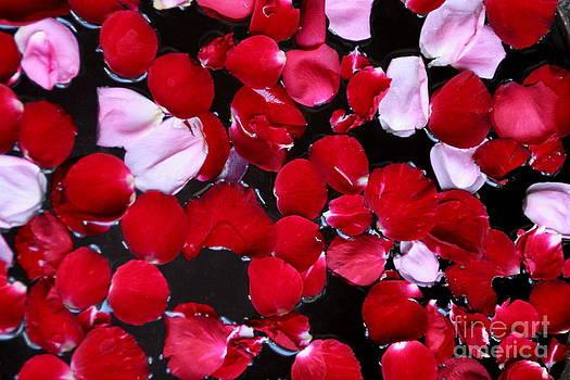 Rose Petal on water by Arie Arik Chen