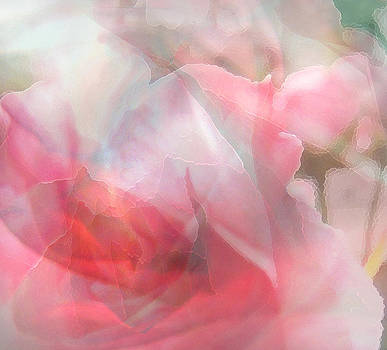 Rose Shadows by Judy Paleologos