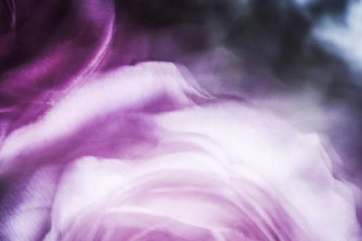 Rose Swirl by Janice Sullivan