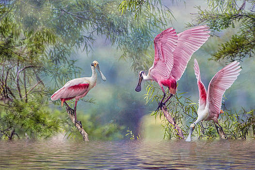 Roseate Spoonbill Trio by Bonnie Barry
