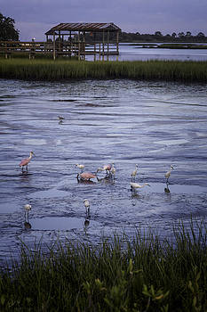Lynn Palmer - Roseate Spoonbills at Twilight