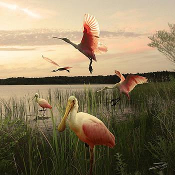 Roseate Spoonbills on Lake Tarpon by Matthew Schwartz