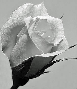 rose bud black single women 23 uplifting rose tattoos for women a large withering rose looks down at a gracefully blooming rose bud in this a beautiful black rose blooms on the side of.
