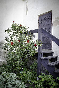 Teresa Mucha - Roses at Marksburg Castle