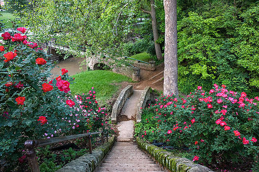 Mary Almond - Roses at Ritter Park