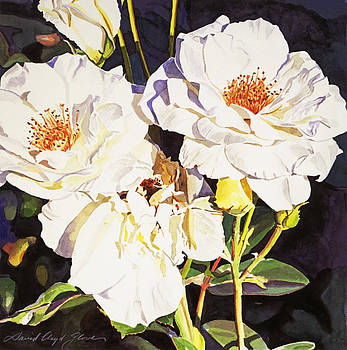 David Lloyd Glover - Roses Blanc