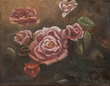 Roses in the Sun by Elizabeth Lane