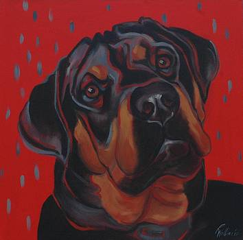 Rottweiler by Pet Whimsy  Portraits