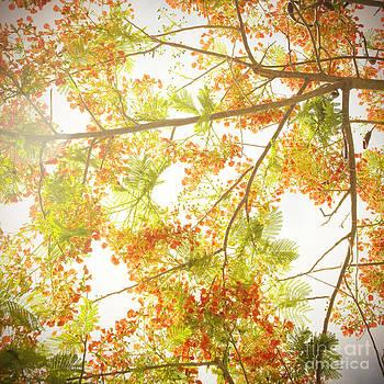 Charmian Vistaunet - Royal Poinciana Branches