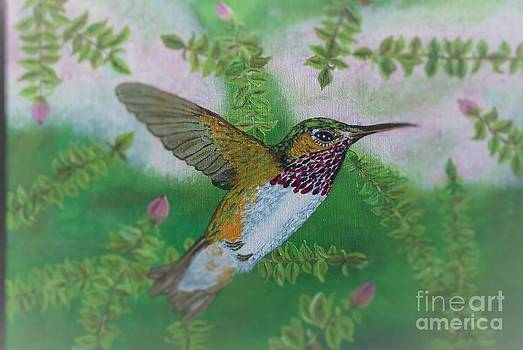 Ruby Throat Hummingbird by William Ohanlan