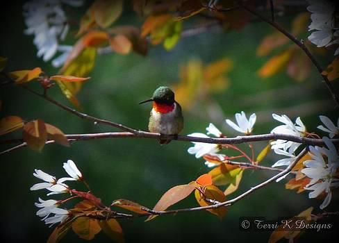 Ruby throated hummingbird by Terri K Designs