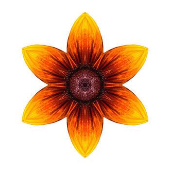 Rudbeckia I Flower Mandala White by David J Bookbinder