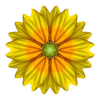 Rudbeckia Prairie Sun I Flower Mandala White by David J Bookbinder