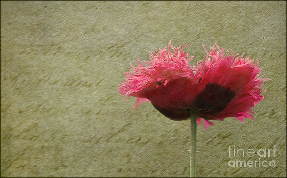 Liz  Alderdice - Ruffled Memories