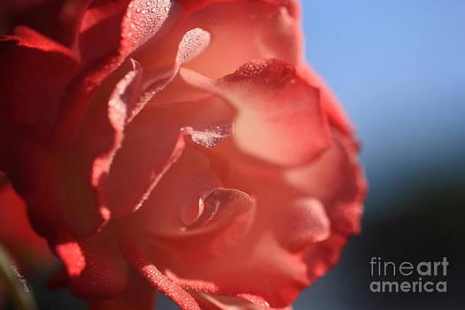 Cheryl Young - Ruffled Rose