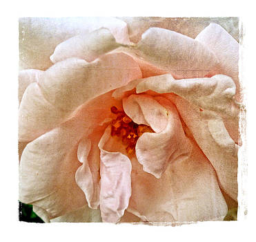 Ruffles by Tanya Jacobson-Smith