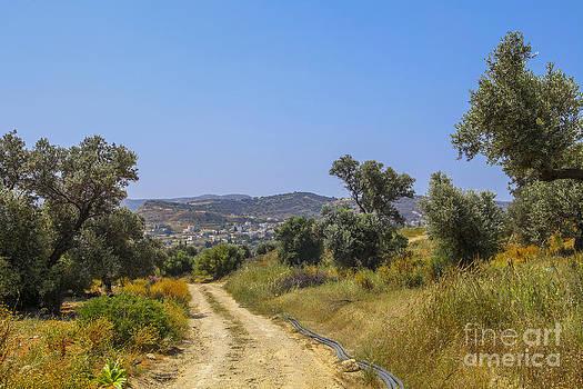 Patricia Hofmeester - Rural road in Crete