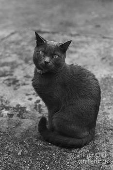 Russian Blue by Tina Osterhoudt