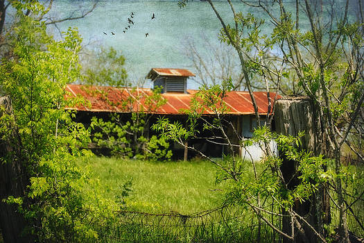 Rusted Roof by Joan Bertucci