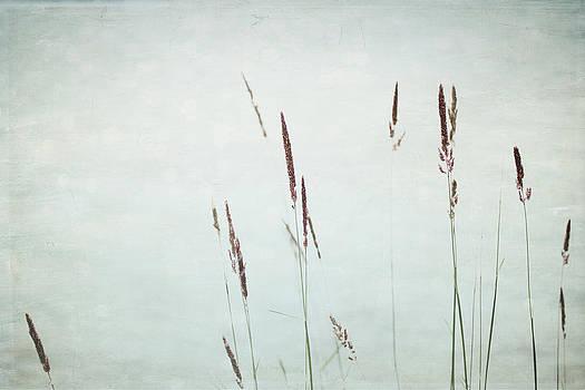 Rustic - Lake Louise by Lisa Parrish