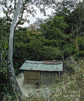 Steven Ralser - Rustic shack