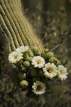 Saija  Lehtonen - Saguaro Bouquet